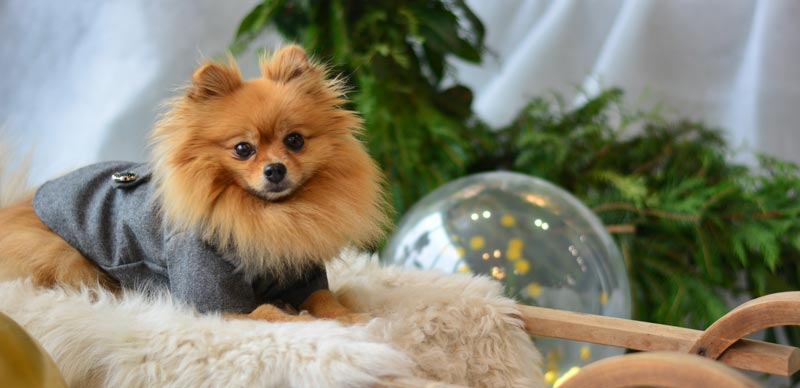 Pomeranian Monthly Expenses