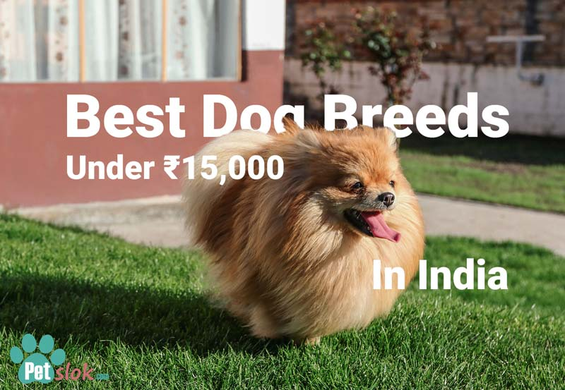 Best dog breed under 15000 in India
